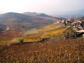Autunno a Barbaresco